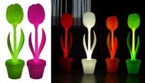 myyour tulip xl Belgique et France